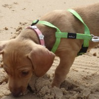 Tasting the sand