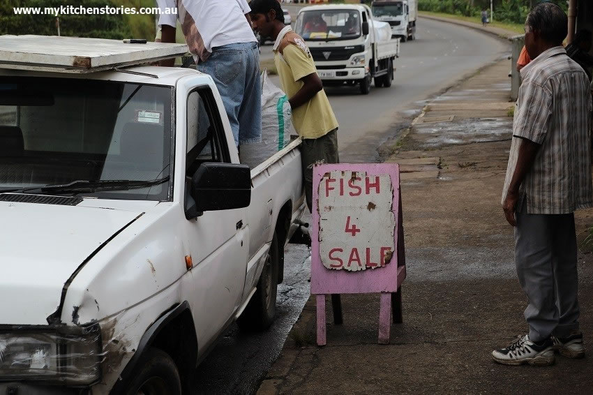 Fish 4 sale