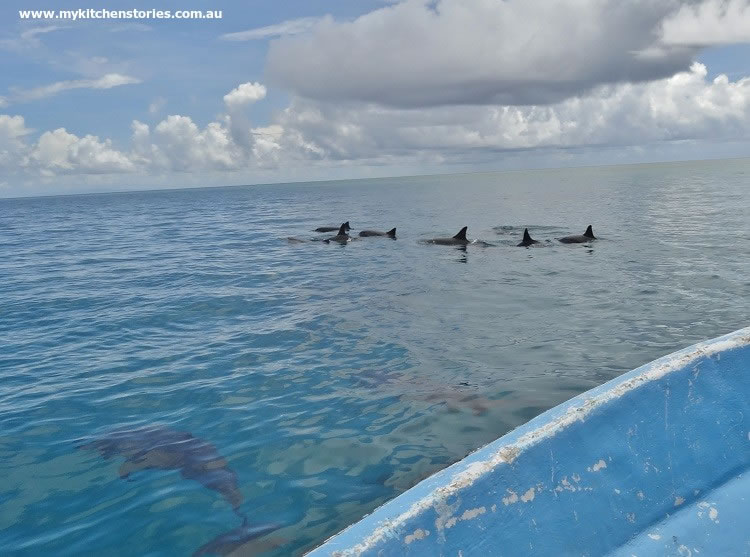 Dolphins all around