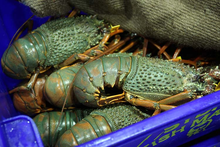 green lobster