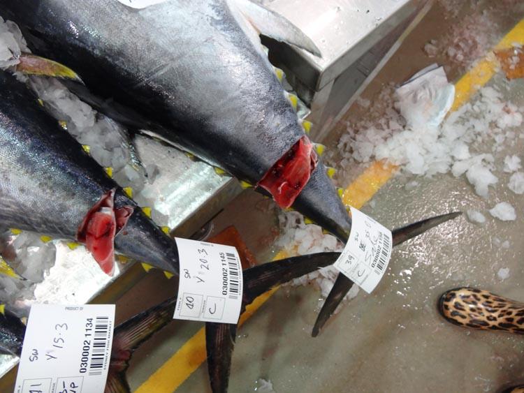 tuna sushimi