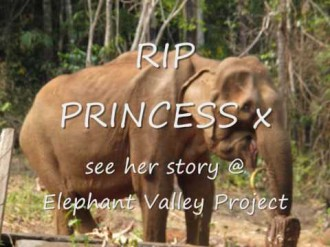 Save Cambodian Elephants- Elephant Valley Project