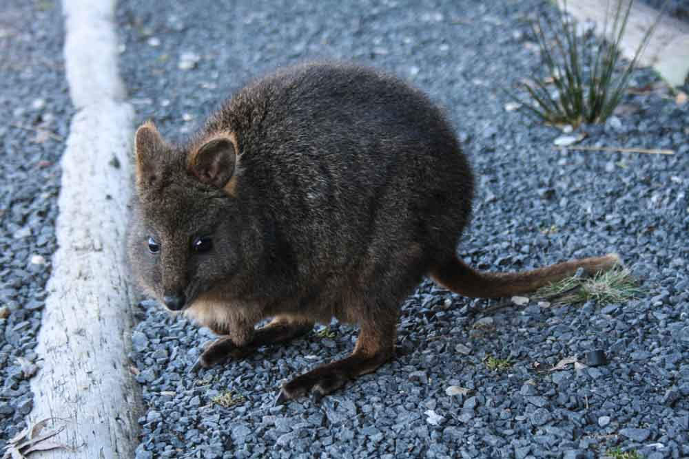 Quakka Tasmania