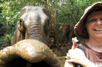 P plates and Elephants and Cambodian strays