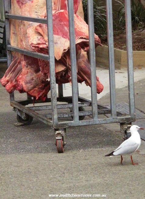 Long week end seagulls