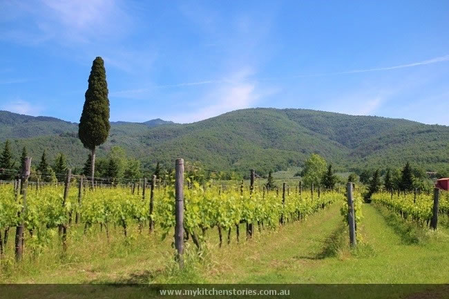 Views of vines and Tuscany