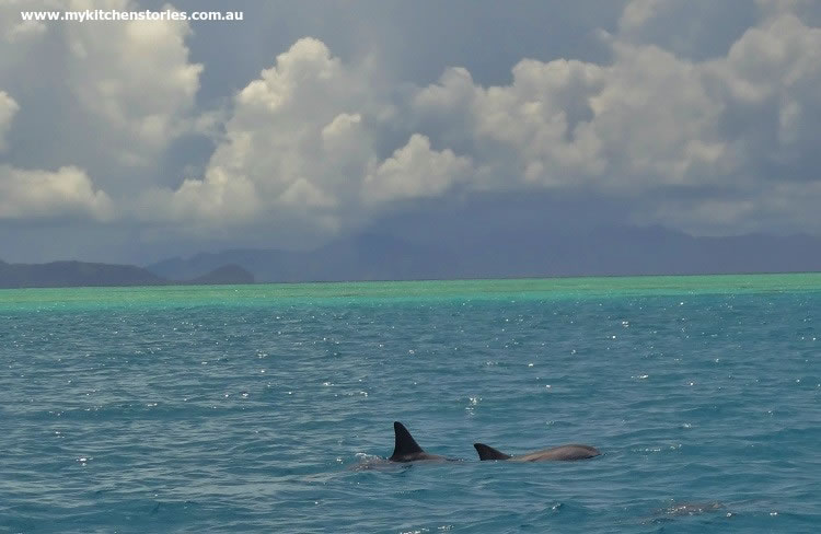 Dolphins on Moon Reef