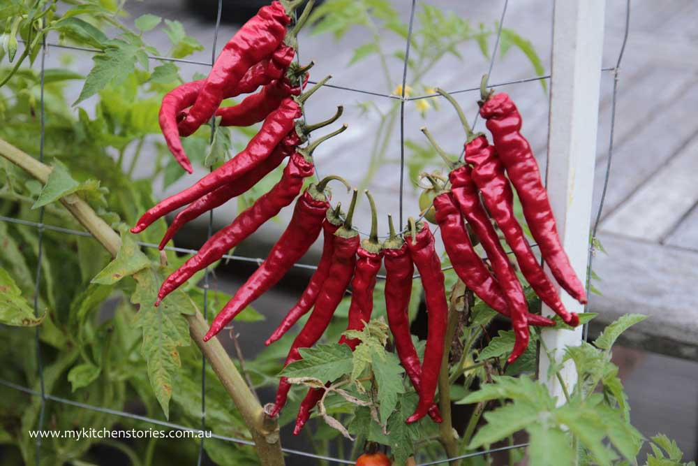 Chillis drying