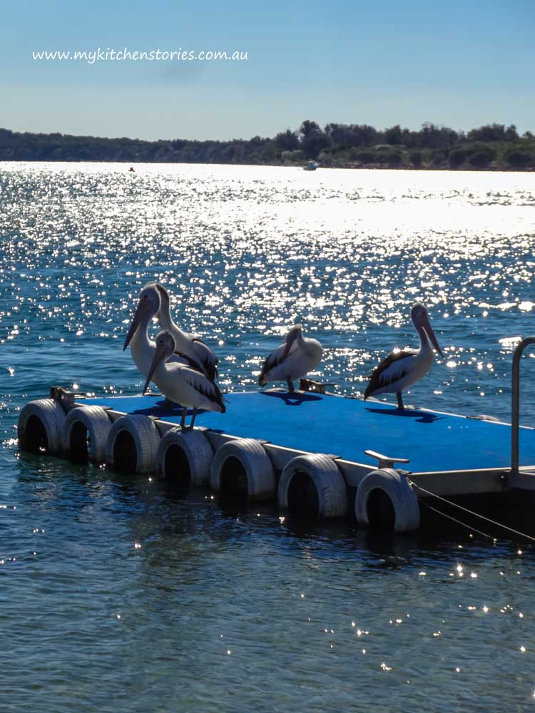 Pelicans on the wharf in Port Macquarie