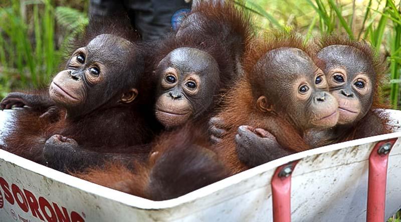 Good V's bad Palm Oil