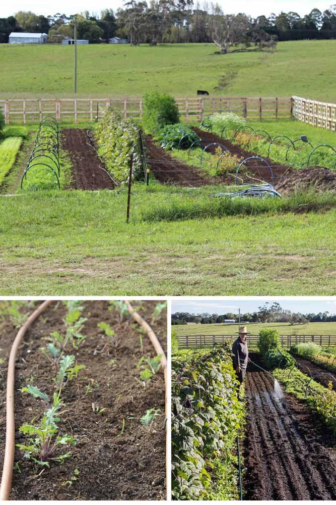 Brillig Farm, Taluca Park