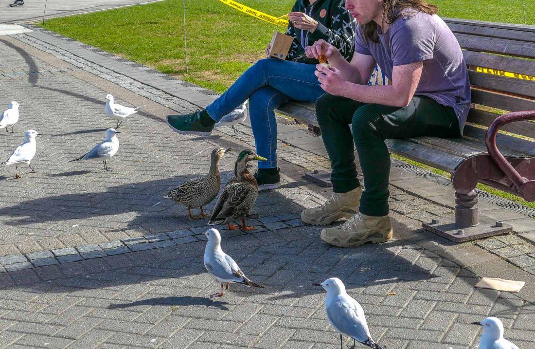 Visiting Queenstown