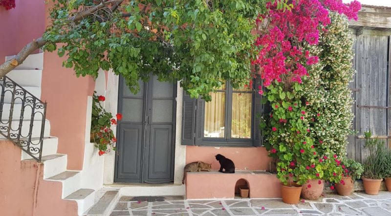 A picture of two cats in greece in front of a coulourful house