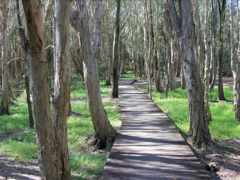 Kooloongbung creek nature reserve