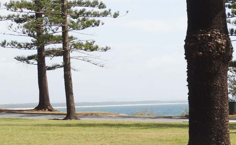 Town beach grass and trees Port Macquarie