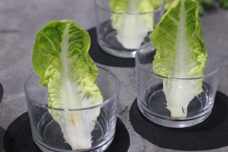 Cocktail glasses with cos leaves