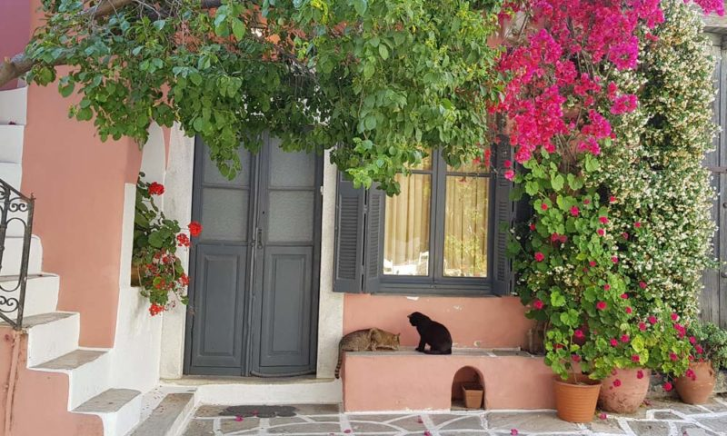 Summer time in Greece. Two cats at home